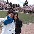 西雅圖。櫻花