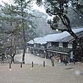 東大寺。奈良公園的漫天飛雪