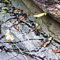 生態-你可以看到的動物