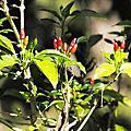 生態-植物系列