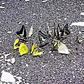 生態-蝴蝶翩翩飛舞
