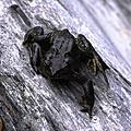 生態-青蛙