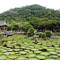 2017-0812 台北市士林區 雙溪公園 大王蓮