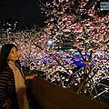 2020-0206 台北市內湖區 2020樂活夜櫻季