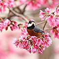 八仙山的鳥類