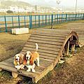 我們在☞蘆堤寵物運動公園 1402