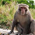 原無名 - 壽山拍猴子 2011.04.05