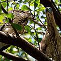 自來水公園拍鳥 2013.12.21