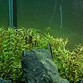 【2012】水草缸