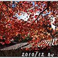 2010/12 福壽山楓狂之旅_Day2