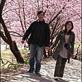2011/02 武陵農場-春櫻之旅_PART1