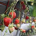 2011/02 Trend苗栗採草莓之旅