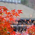 D5 京都 清水寺