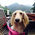✿烏來郊區景觀寵物友善餐廳-La Villa✿