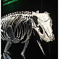 展‧地球最古老的恐龍展‧120811