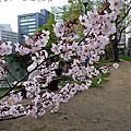 2009春的北海道自由行_舊道廳賞櫻