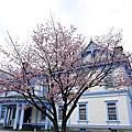 2009春的北海道自由行_中島公園