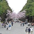2009春的北海道自由行_圓山公園,北海道神宮