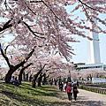 2009春的北海道自由行_五稜郭公園賞櫻