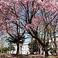 2009春的北海道自由行_北海道大學