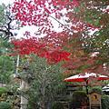 2008京都賞楓~第三天