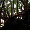20070211 安平樹屋