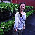 2011.4.30 苗栗大湖採草莓