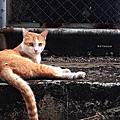 可愛動物區:貓咪