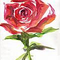 20070818-隨筆玫瑰
