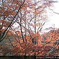 20141216奈京阪神之旅