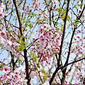 2011 4/2 週六 台北奧萬大