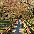 20140123擎天崗、陽明山賞櫻
