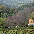 20140217陽明山花季