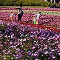 20150102台北圓山聖誕花卉展