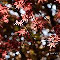20150403竹子湖海芋季