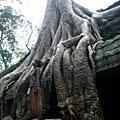 Angkor 吳哥窟