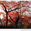 京都賞楓。東福寺