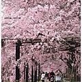[京都|半木の道。prinz]