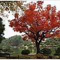 [東京|清澄白河 散策半日遊(下)。迴遊式的清澄庭園]