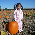 Halloween/Pumpkin Patch