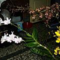 我家-美麗的蘭花