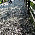 出戰日誌------第五天。京都
