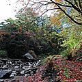 楓葉小瀑布。楓紅谷108K
