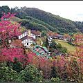 20130203 [新竹五峰] 山上人家的賞櫻之旅