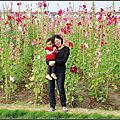 20130404 [台南學甲] 一丈紅的蜀葵花田