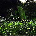 20130429 [新竹橫山] 賞螢秘境--田寮坑賞螢火蟲