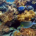 20130502 [屏東車臣] 海洋生物博物館