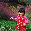 20140216 [苗栗南庄] 碧絡角花園咖啡民宿櫻花季