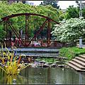 20140404 [新竹東區] 護城河的流蘇開花了