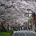 20140405 京都大阪賞櫻行-高瀨川&鴨川散策